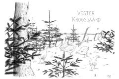 Vester Krogsgaard - økologisk landbrug i Thy